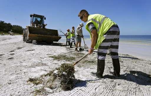 Devastating toxic algae bloom plagues Florida's Gulf Coast