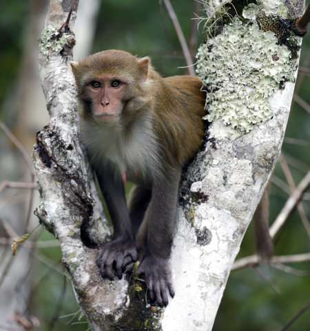 Florida wants to remove virus-excreting wild monkeys