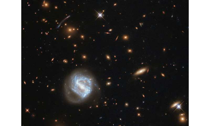 Image: Hubble's galaxy cluster cornucopia