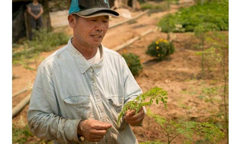 Moringa, the next superfood