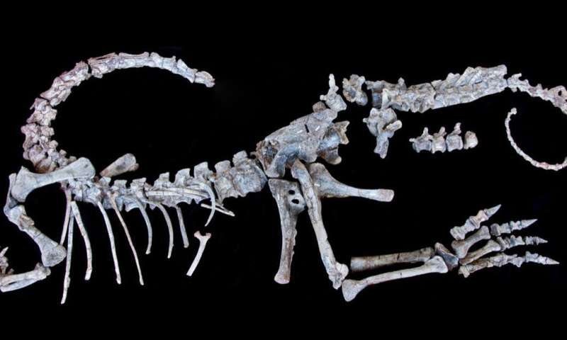 Newly described fossils could help reveal why some dinos got so big