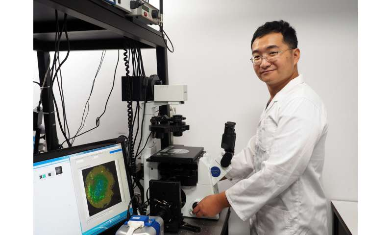 New nanoparticles help detect deep-tissue cancers