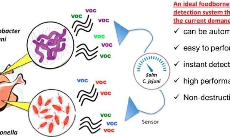 Rapid detection of foodborne pathogens