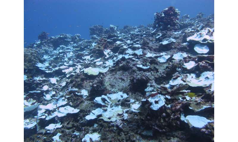 Look for serious educational events in the reef of the Pacific Coral Reef last century