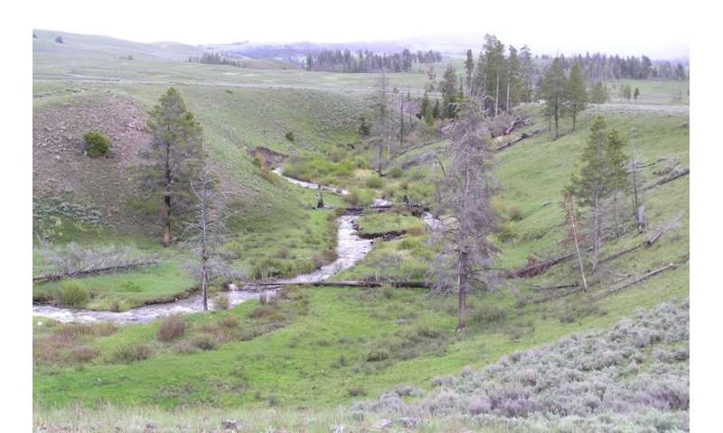 Yellowstone streams recovering thanks to wolf reintroduction