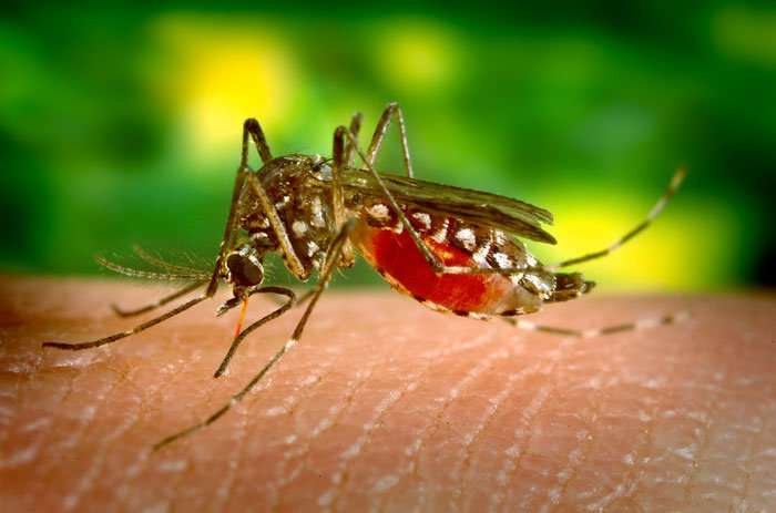 Researchers predict areas of mosquito-borne disease risk in Brazil