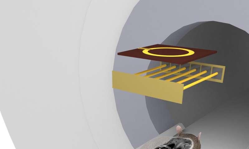 Scientists design new MRI coil for preclinical studies