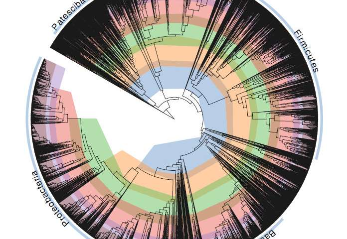 Scientists 'fix' bacterial tree of life