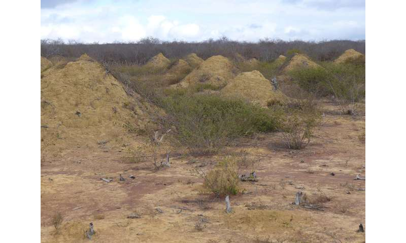 4,000-year-old termite mounds found in Brazil are visible from space 4000yearoldt
