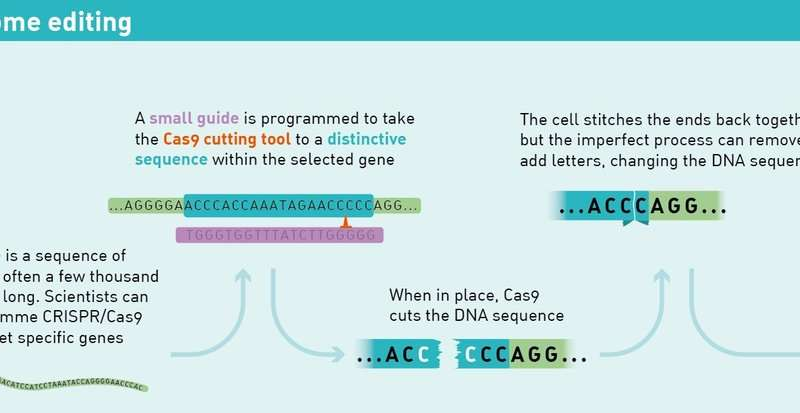 Scientists crack the CRISPR code for precise human genome editing
