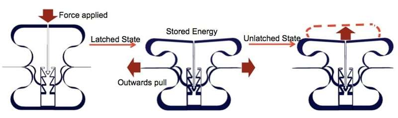 Scientists design material that can store energy like an eagle's grip