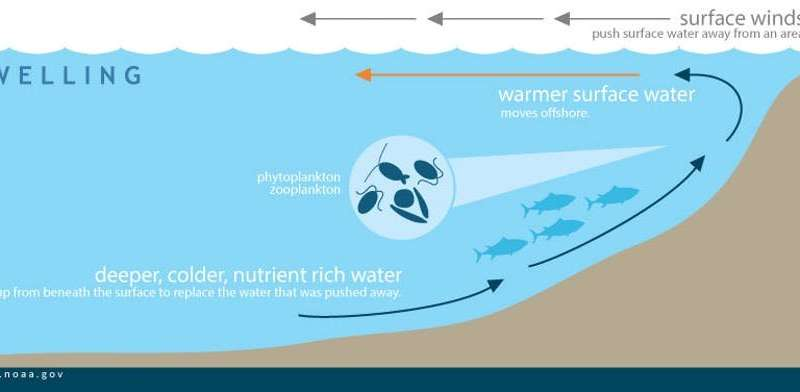 Climate change could alter ocean food chains, leading to far fewer fish in the sea