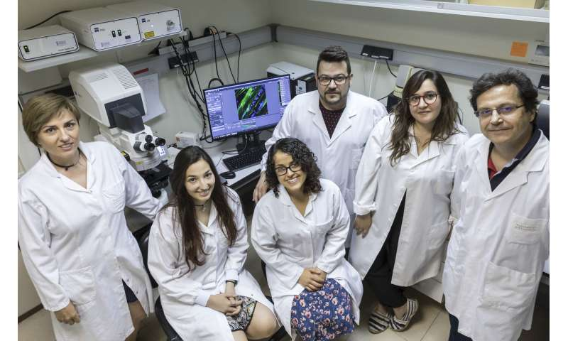 Researchers complete myotonic dystrophy treatment research