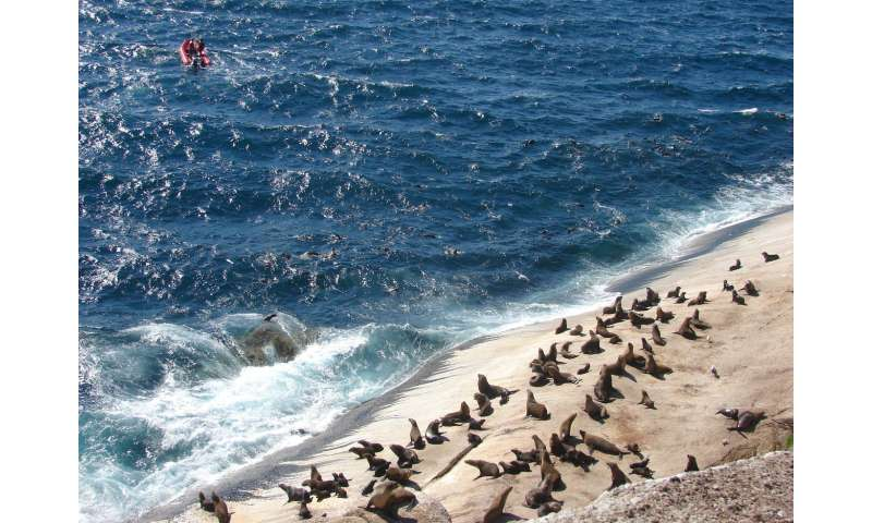 Australian study into how seals react to boats prompts new ecotourism regulations
