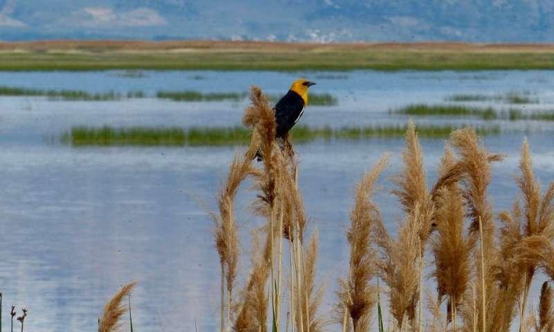 Citizen science birding data passes scientific muster