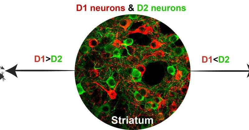 NIH scientists develop novel technique to study brain disease