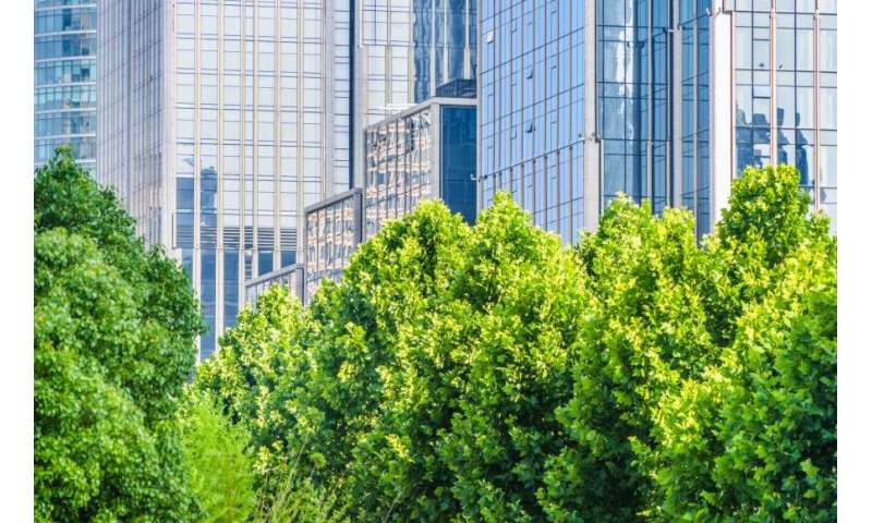 Protecting our thirsty urban trees from more harsh summers