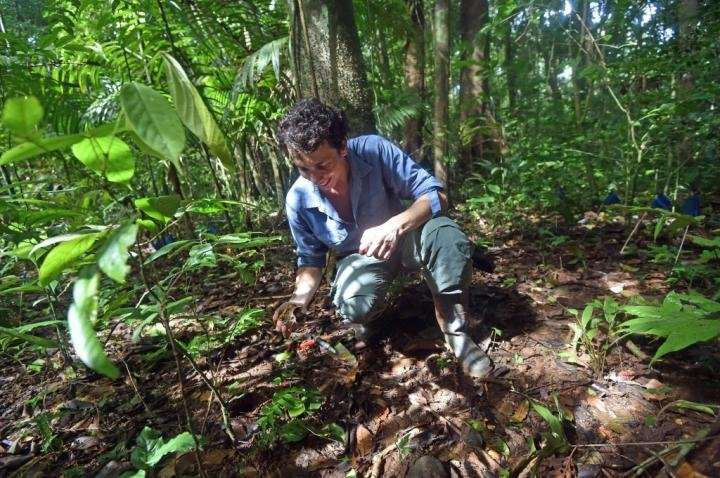 Tropical forest seeds use three strategies to survive