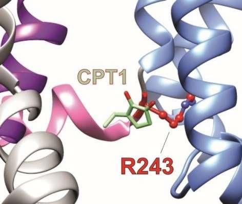 UCI researchers discover molecular mechanisms of African folk medicine