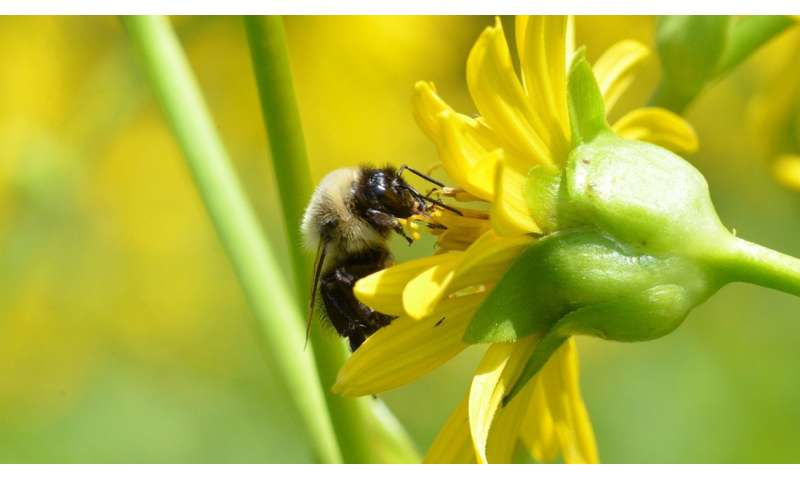 Study reveals best use of wildflowers to benefit crops on farms