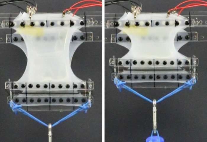 New class of soft, electrically activated devices mimics the expansion and contraction of natural muscles