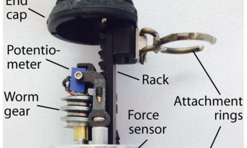 Robotic implants spur tissue regeneration inside the body