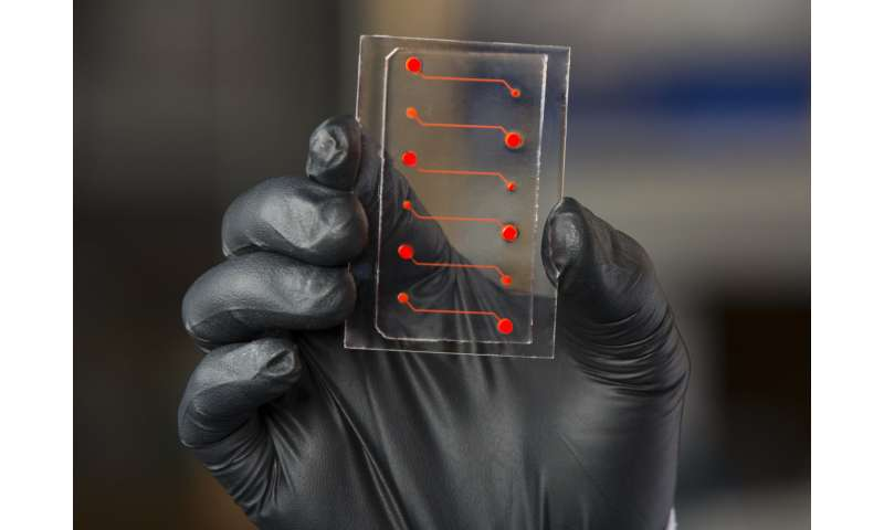 Blood-vessel-on-a-chip provides insight into new anti-inflammatory drug candidate