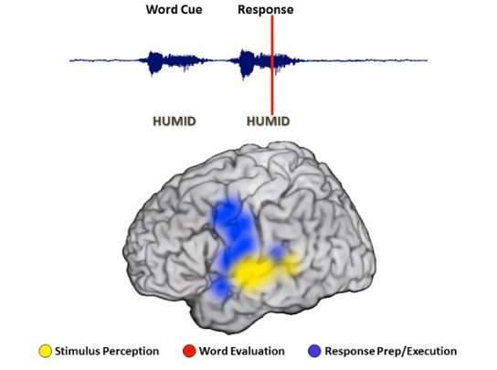 Recording a thought's fleeting trip through the brain