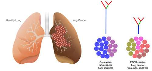 New study links genetic diversity of tumours with resistance to treatment in asian lung cancer patients