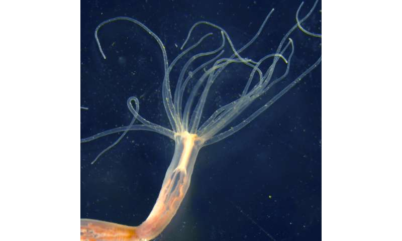 Jellyfish adapt their venom to accommodate changing prey and sea conditions