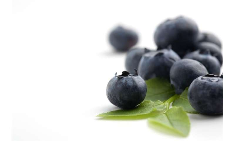 New health benefits discovered in berry pigment
