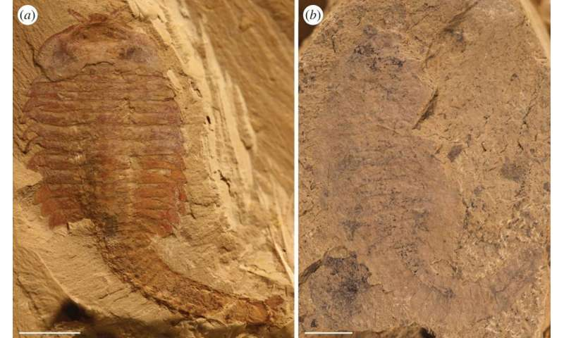 Researchers suggest ancient preserved circulatory and nervous systems in China are actually biofilms