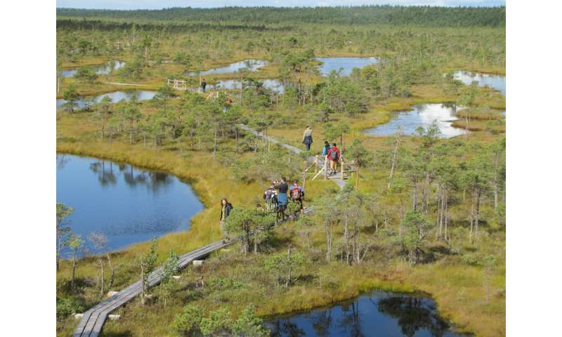Warming planet led to peatland formation