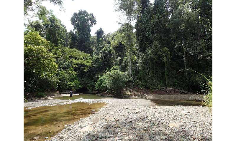 Small changes in rainforests cause big damage to fish ecosystems