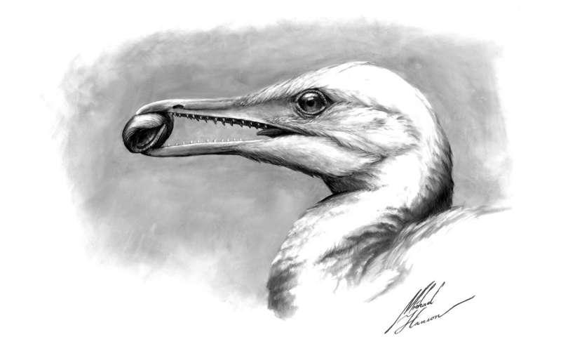 Scientists find the first bird beak, right under their noses