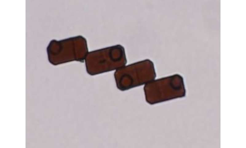 Custom silicon microparticles dynamically reconfigure on demand