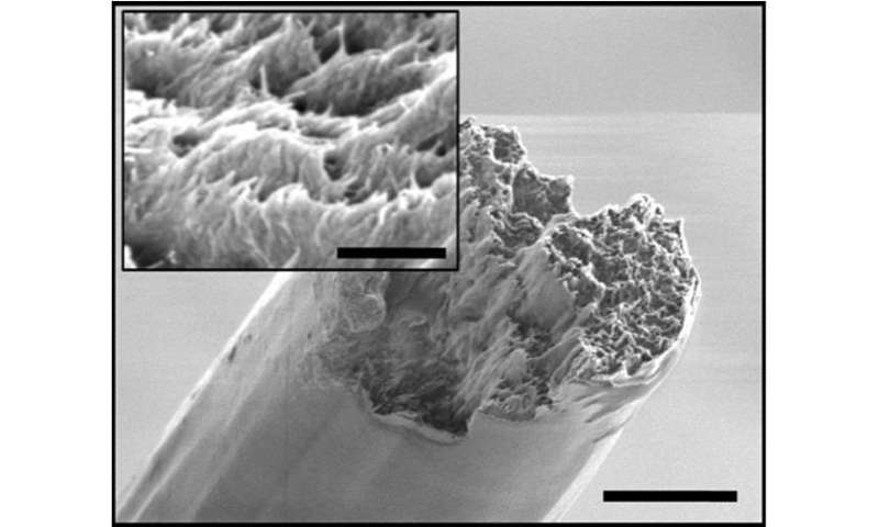 Method assembles cellulose nanofibres into a material stronger than spider silk