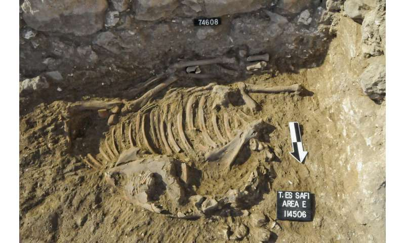 Archaeologists uncover earliest evidence for equid bit wear in the ancient Near East