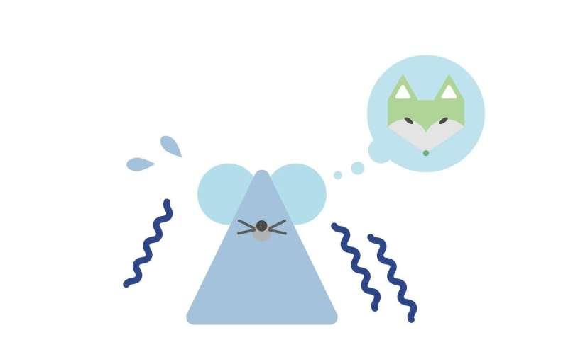 An unexpected chemosensor pathway for innate fear behavior against predator odor