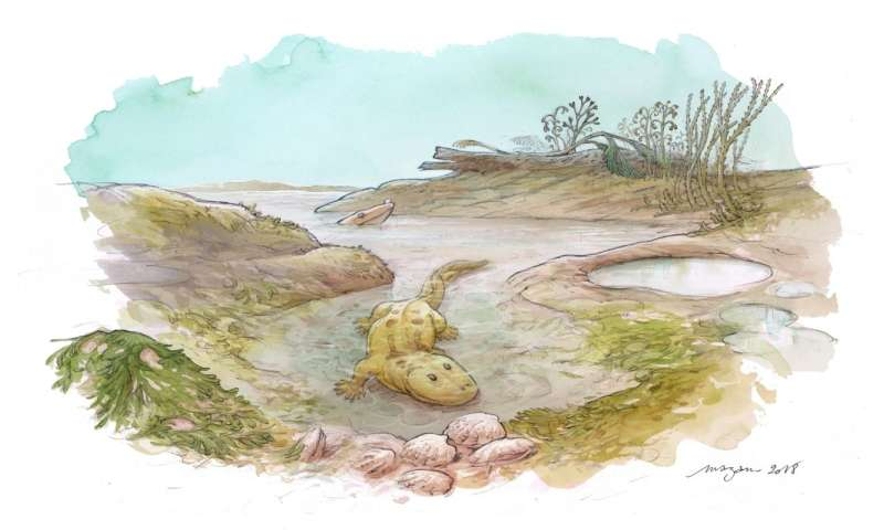 Stable isotopes suggest earliest tetrapods were euryhaline creatures