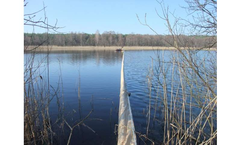 What the size distribution of organisms tells us about the energetic efficiency of a lake