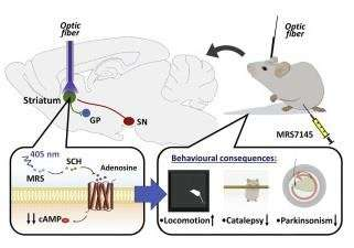 First photoactive drug to fight Parkinson's disease
