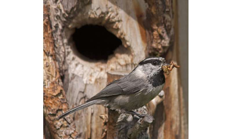 How fledglings and their parents negotiate the best time for young birds to leave the nest