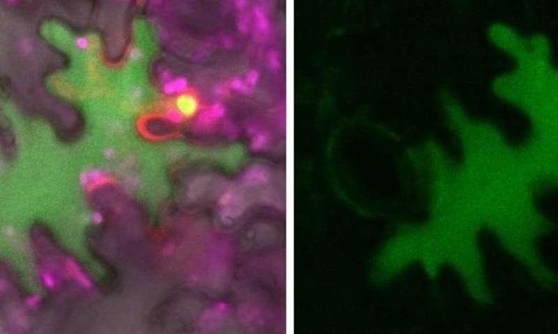 Receptor networks underpin plant immunity