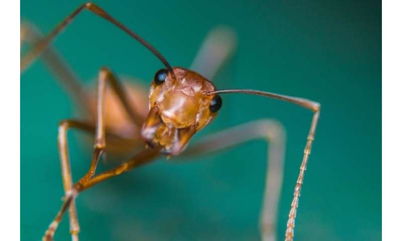 Hormonal control of appetite in ants identified