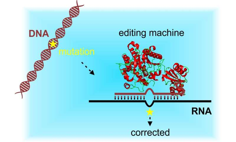 Site-directed RNA editing as an alternative to genetic scissors