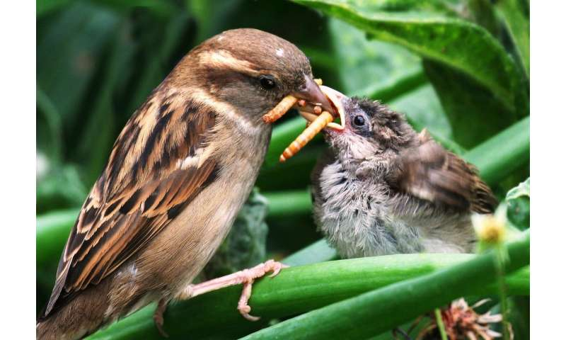 Insectivorous birds consume annually as much energy as the city of New York