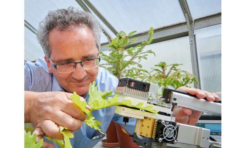 Particulate matter increases drought vulnerability of trees