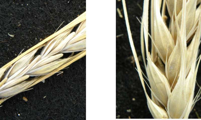 Barley heads East -- living plant varieties reveal ancient migration routes across Eurasia