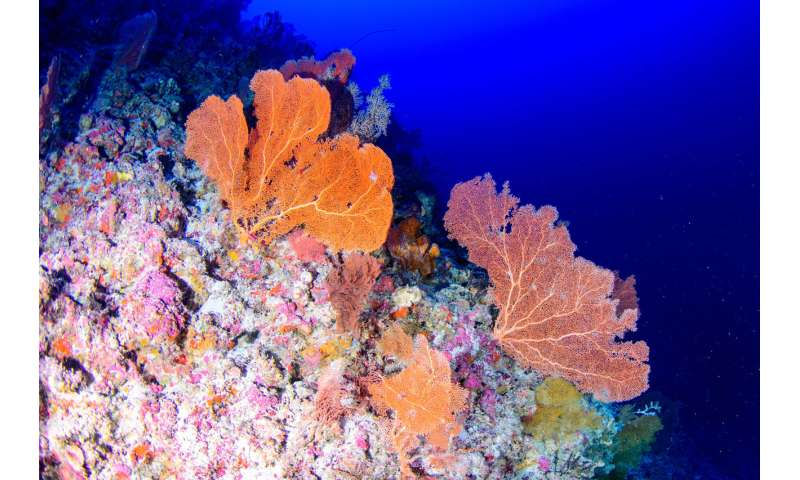 Deep-diving scientists say shallow reefs can not rely on Twilight Zone systems for recovery
